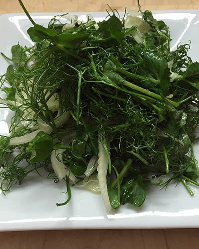 Pea Shoot & Fennel Salad